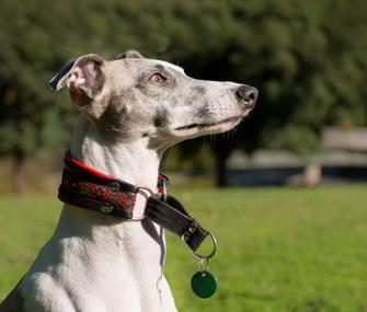 Toronto.guide dogs choke collars