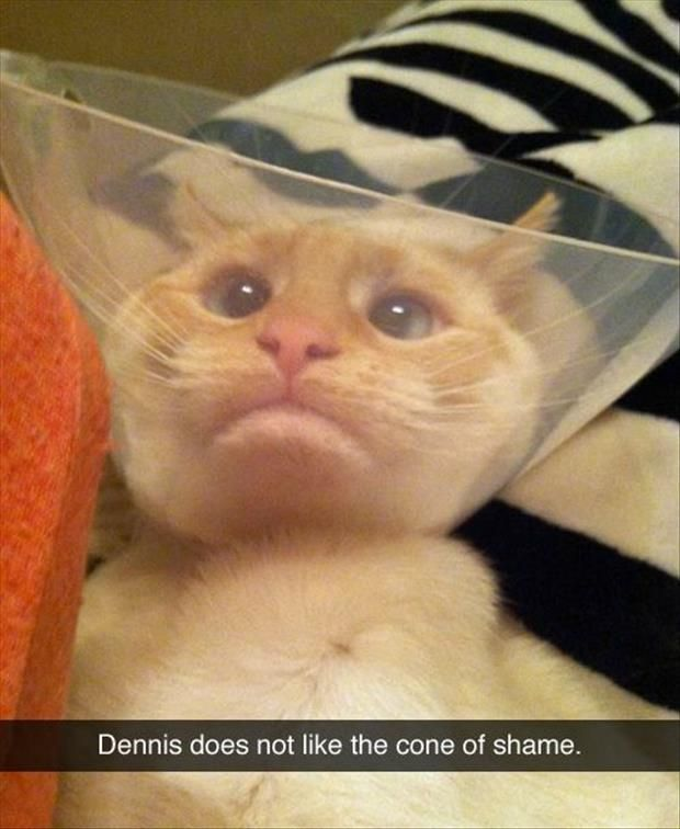 Vet funnel how to put one on a cat
